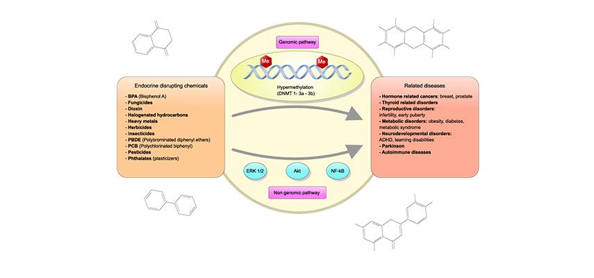 NUNII takes proactive measures to avoid endocrine disruptors